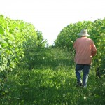 Elio Altare in his vineyard