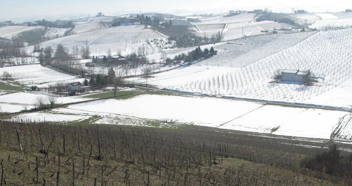 Laiolo Suris vineyard, Vinchio
