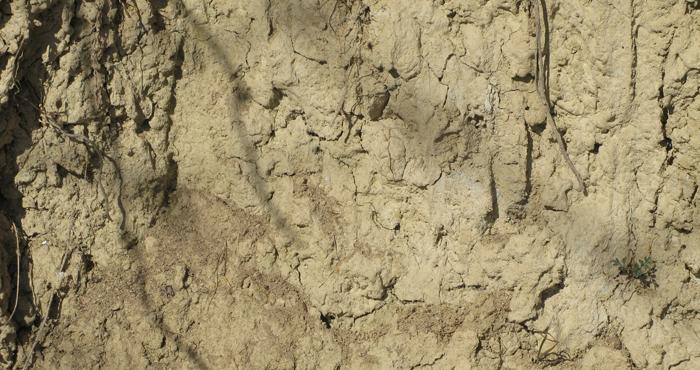 Sandy, tufo soils in the vineyard