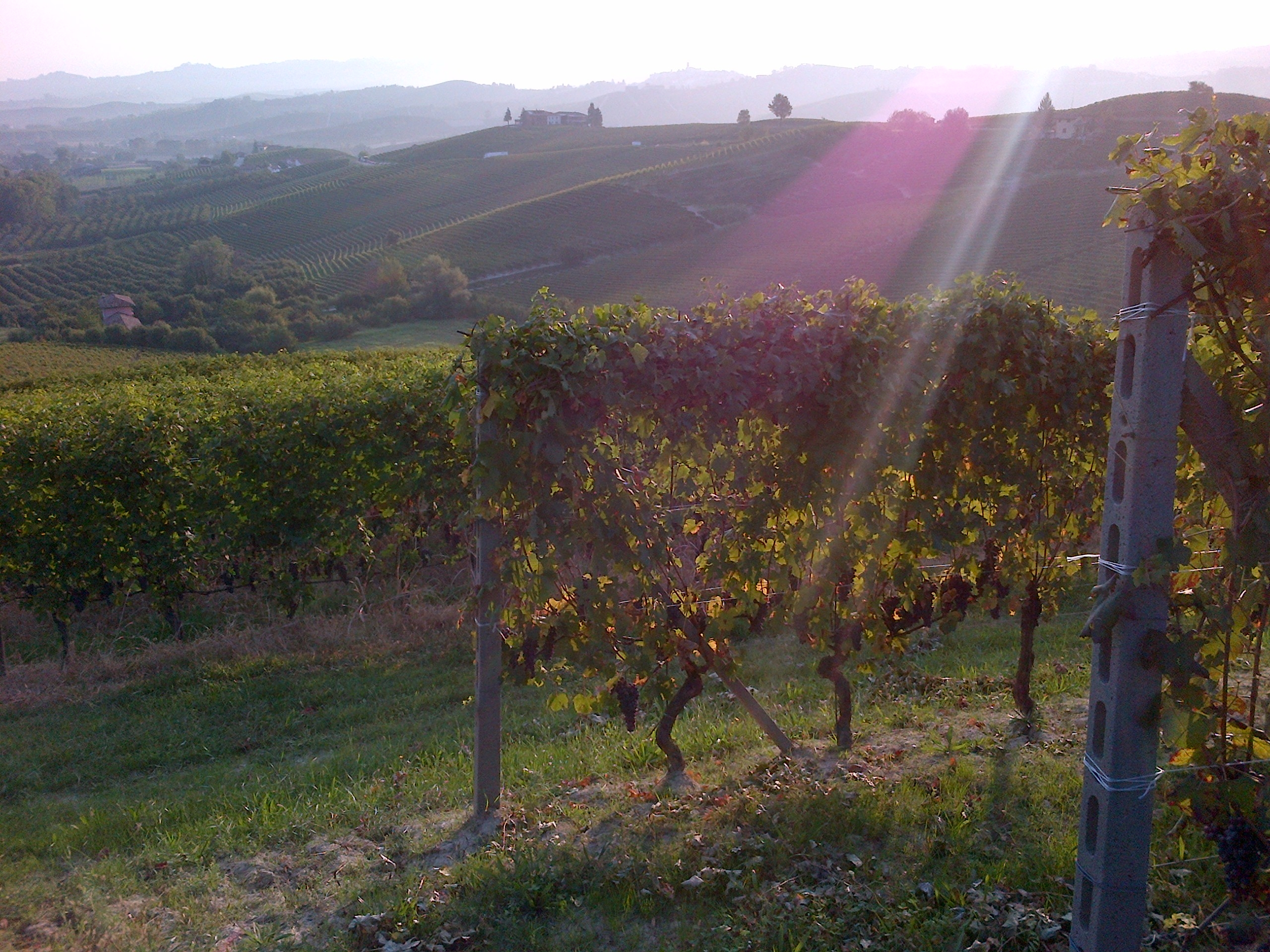 Vineyards in Barolo