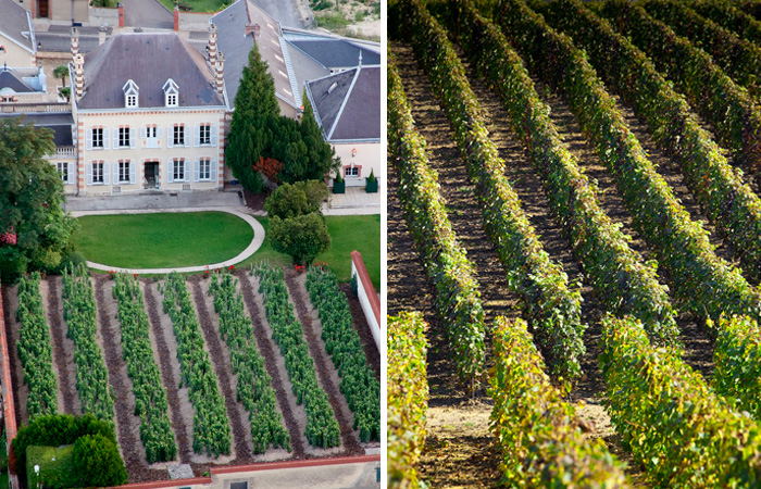 Left : Aerial views of Bollinger Right: Pol Roger Vineyards