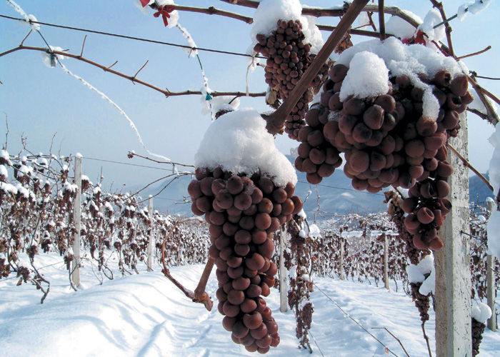 Chinese Wine Comes of Age — Berry Bros. & Rudd Wine Blog