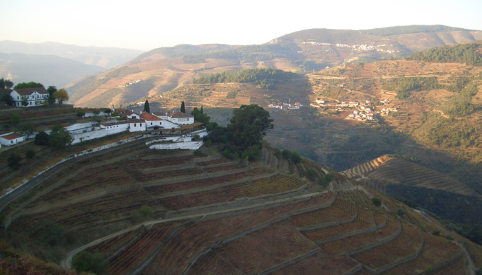 douro-vineyards