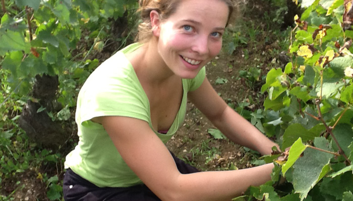Léa Lafon picking her father's Bourgogne Blanc