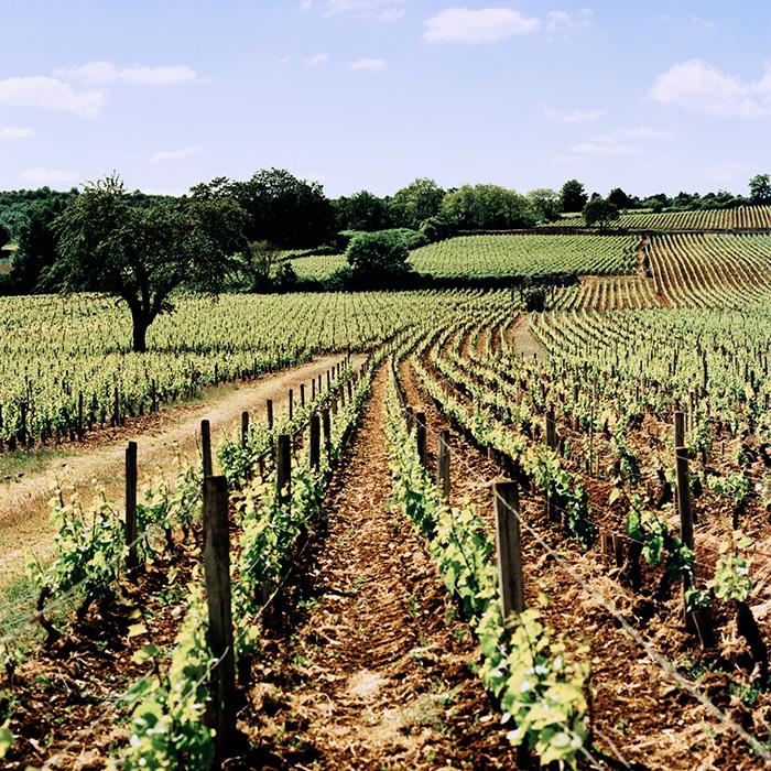 Meursault,-Cote-D'Or---BBR_France_Scans-016_2