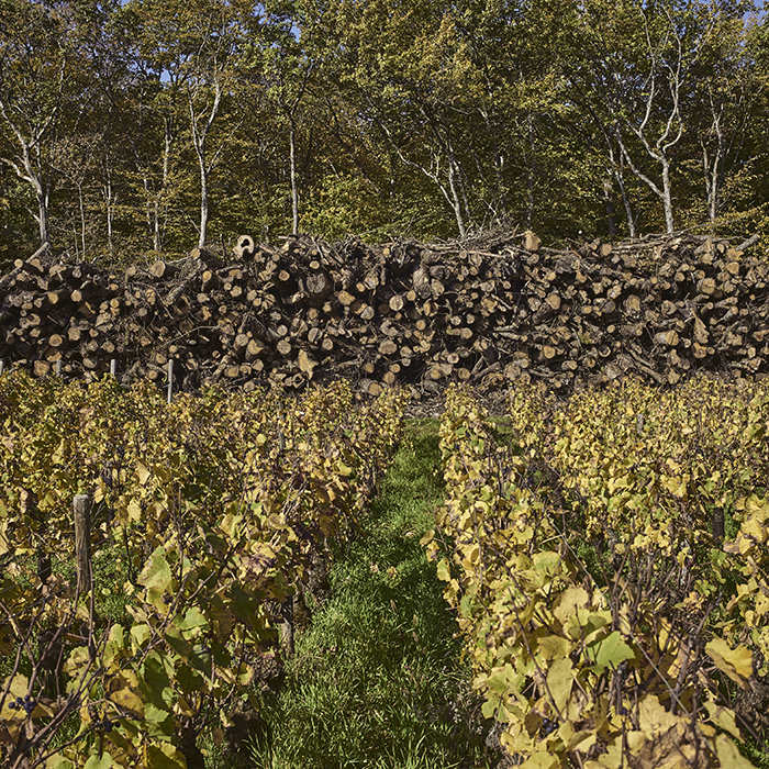 2007 vintage report for beaujolais