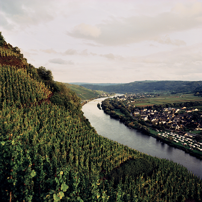Vines cling to the steep cliffs along the banks of the Mosel. Photograph: Jason Lowe