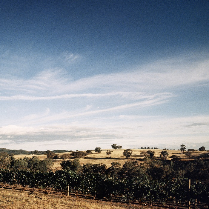 The view across Giaconda's vines and beyond. Photograph: Jason Lowe