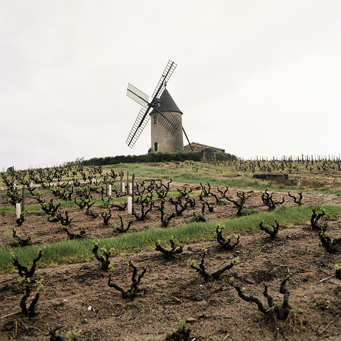 The famous Moulin-a-Vent of the eponymous Cru in Beaujolais, Burgundy. Photograph: Jason Lowe