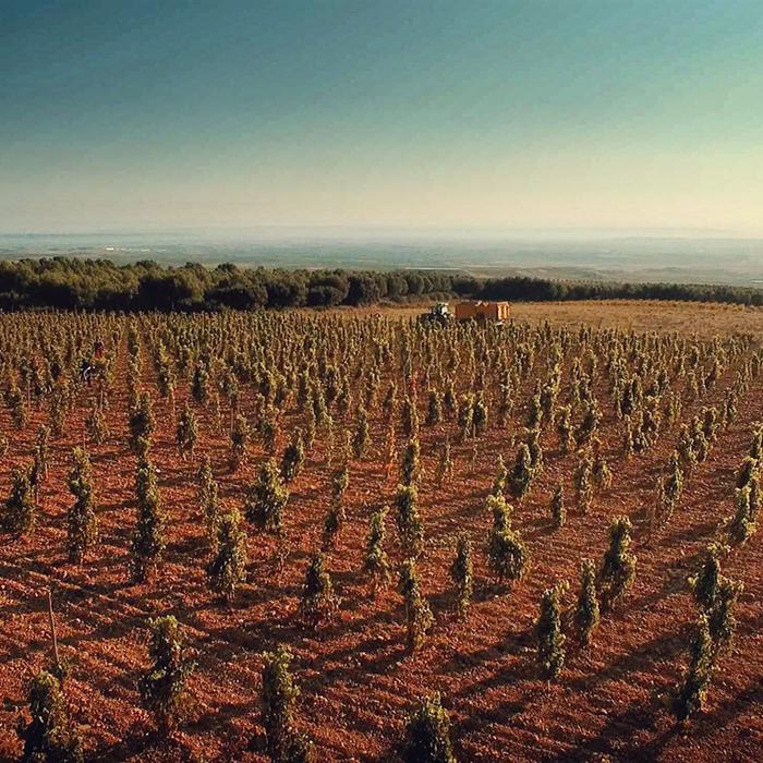Alvaro Palacios's Valmira site on Mount Yerga in Alfaro, Rioja Oriental