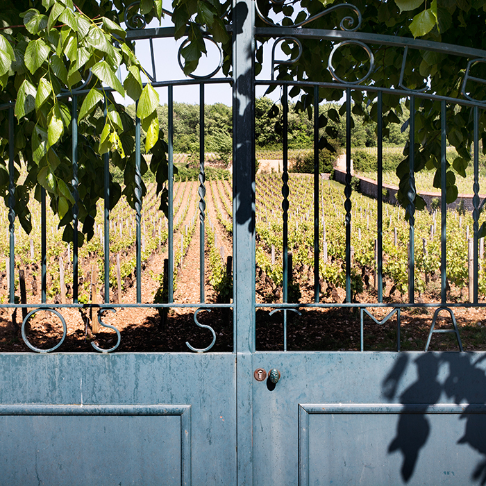 Looking through the gates to Clos St Marc, Patrice Rion's monopole in Nuits-St Georges, photographed by Jason Lowe