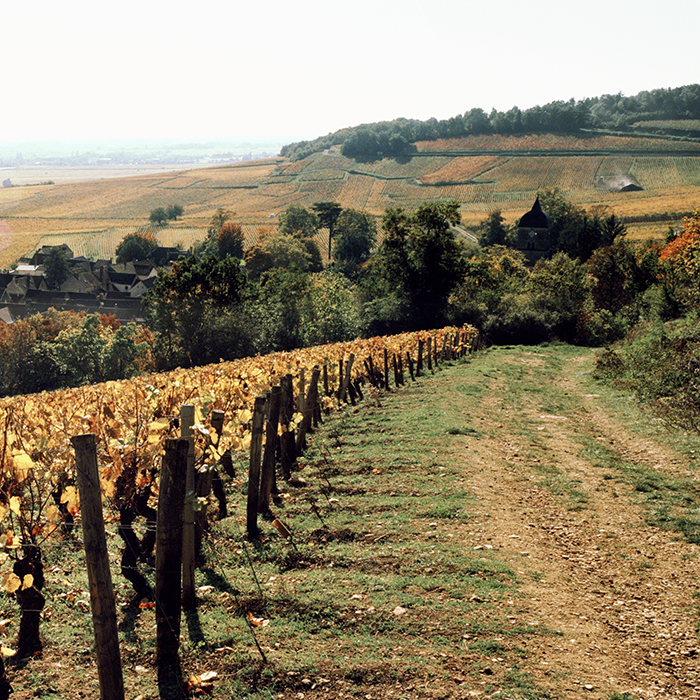 Burgundy. Photograph: Jason Lowe