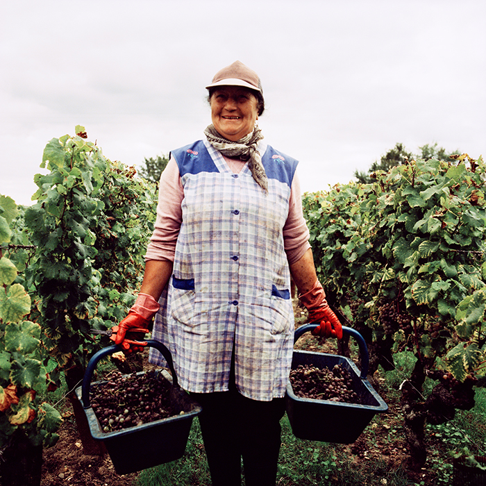 A happy vineyard worker at harvest time in Bordeaux. Photograph: Jason Lowe