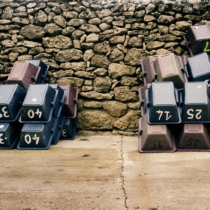 Picking crates at Chateau Climens, Barsac. Photograph: Jason Lowe