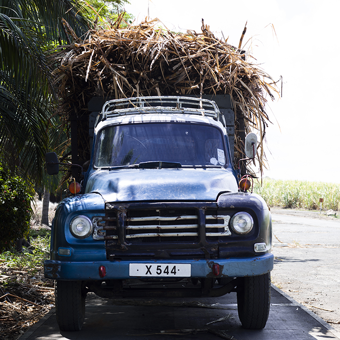 Sugar cane being transported in Mauritius. Photograph: Jason Lowe