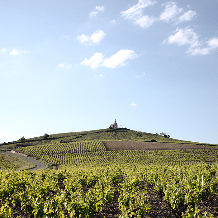 Everything you need to know about Beaujolais — our guide to the region