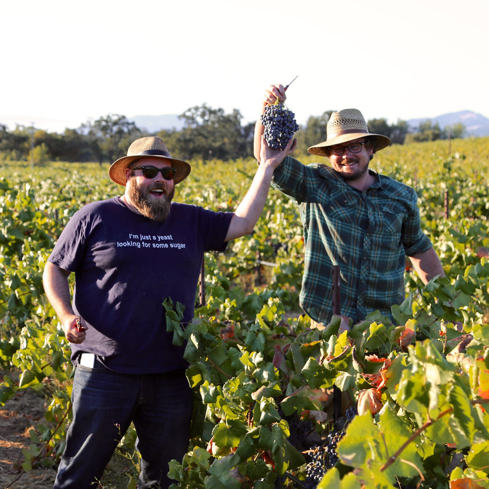 Bedrock's winemakers, Chris Cottrell and Morgan Twain-Peterson, in the vineyards