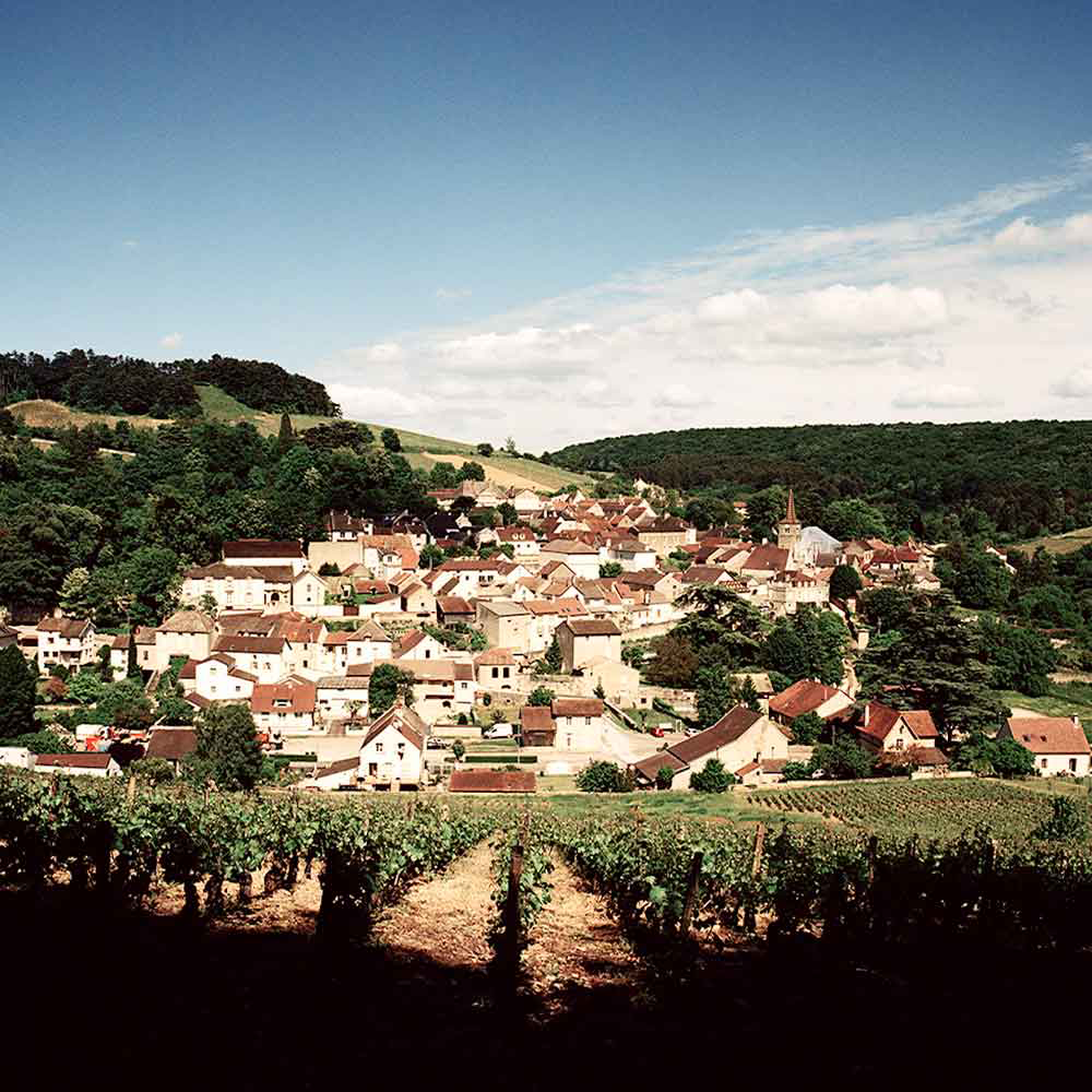 An image of Santenay, one of the appellations of Burgundy worth seeking out