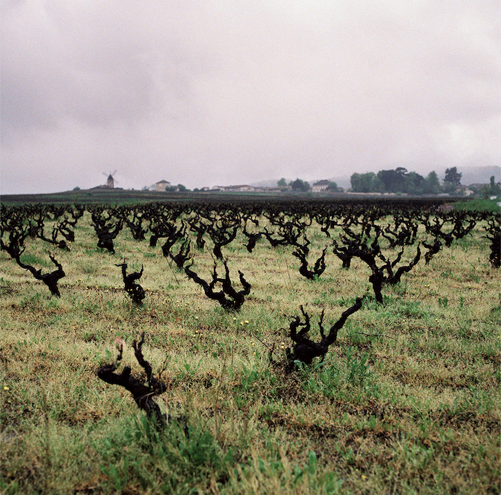 The vineyards of Beaujolais in winter
