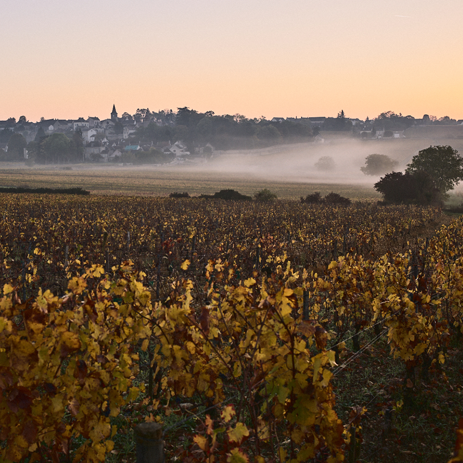 An image of the vineyards in Burgundy