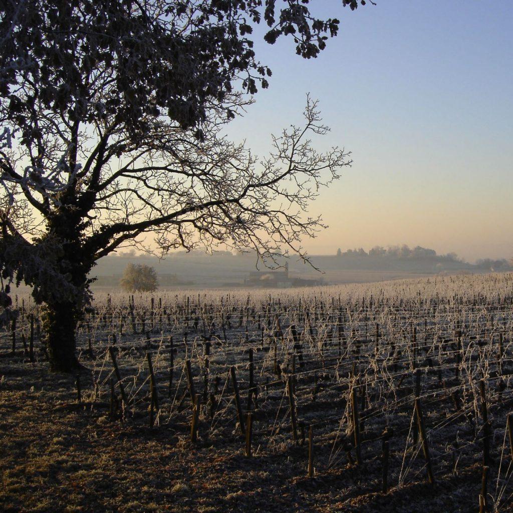 Frost in the vineyards in Bordeaux